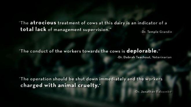 Videogram: Burger King Cruelty - Video Exposes Horrific